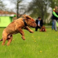 Esparcimiento canino